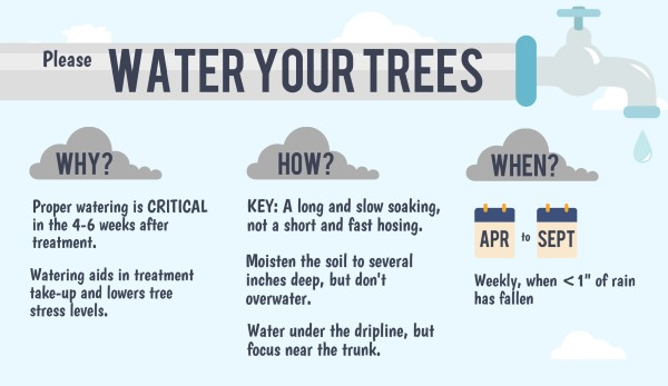 Water your tree following Emerald Ash Borer treatment