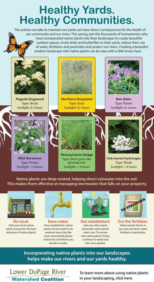 Native Plantings infographic
