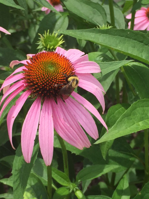 Bees visit the Pollination Station