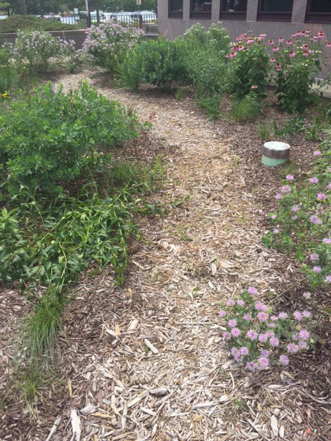 The path through the Pollination Station