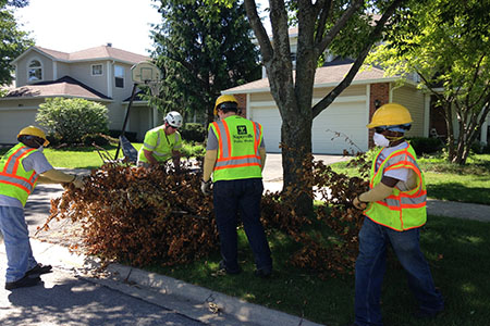 Curbside Bulk Brush Collection