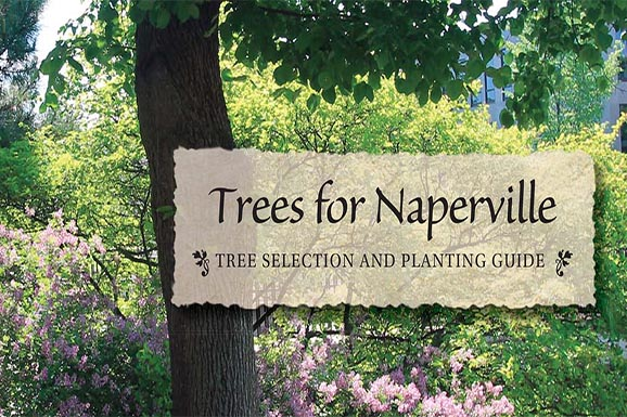 Trees for Naperville