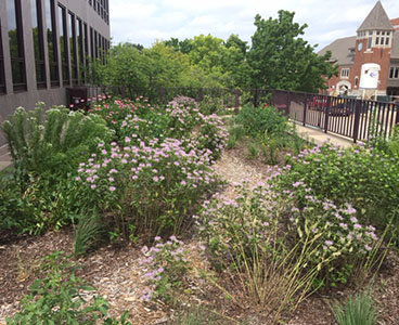 The Pollination Station at the Municipal Center