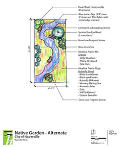 The original planting plan for the Pollination Station - some species planted have changed since this rendering